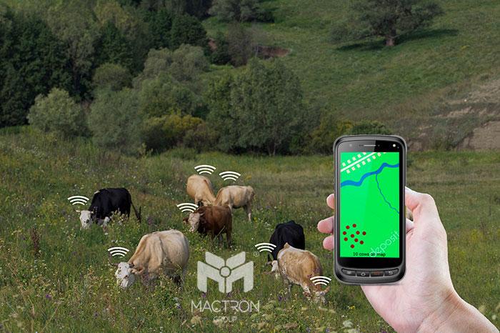 Livestock management => HF RFID